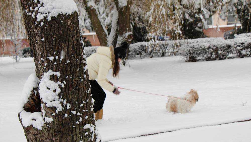 Брянской области 15 декабря пообещали снег и гололедицу