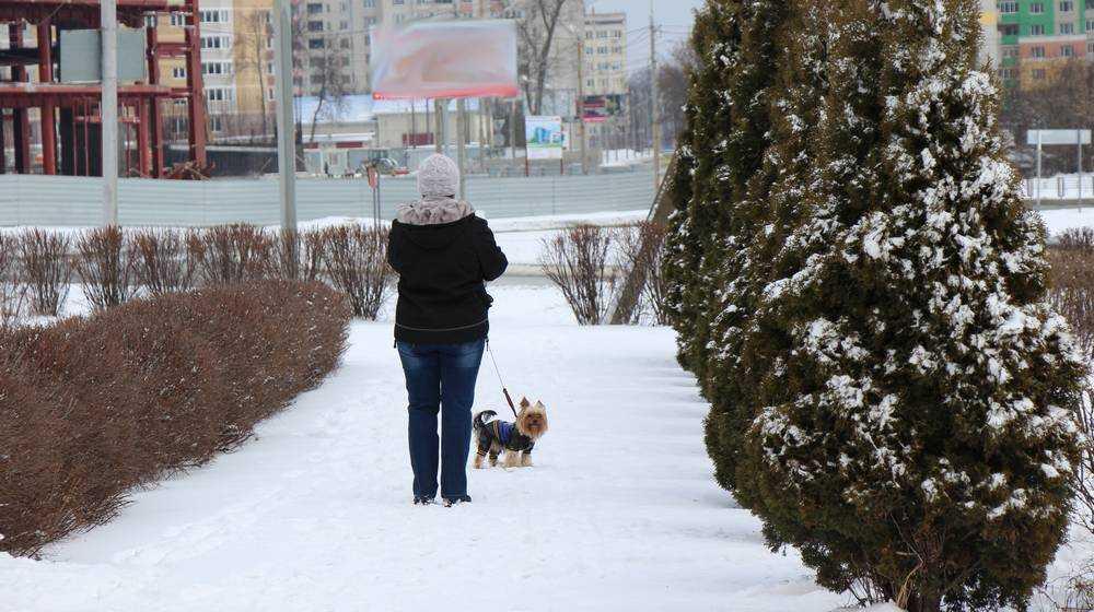 В Брянскую область ночью придёт 15-градусный мороз