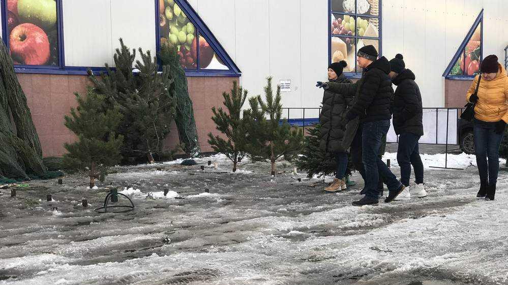 В Брянске возник повышенный спрос на живые елки