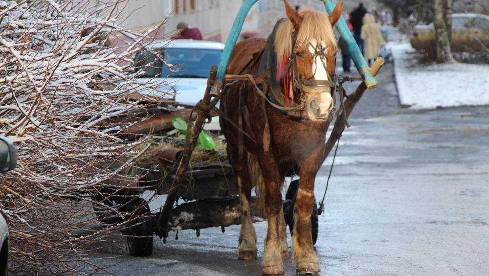 Новогодняя ночь в Брянской области будет теплой, дождливой и снежной