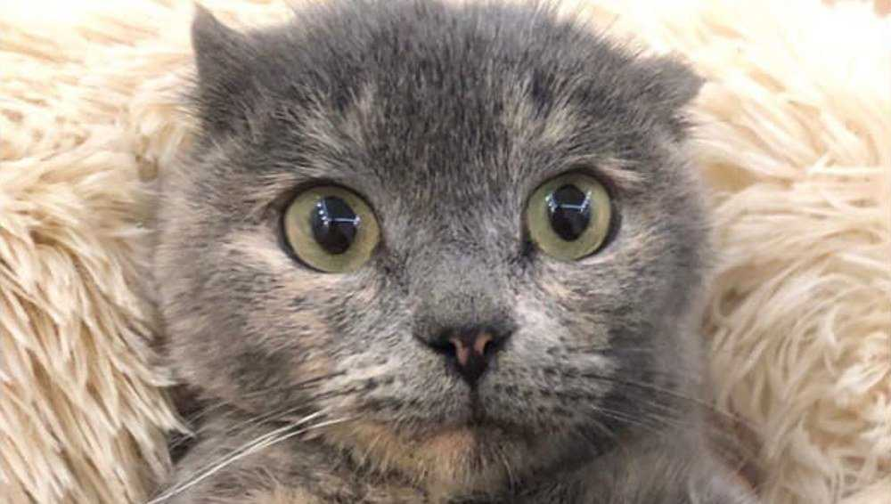 В брянском приюте рассказали о кошке без лапок