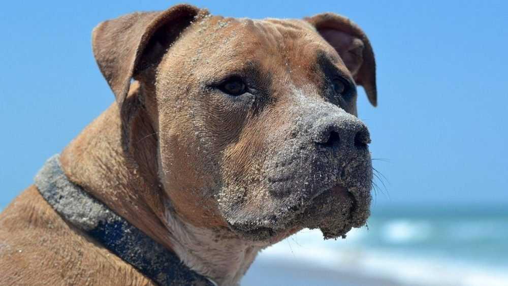 В Брянске собака покусала женщину и ее мужа на Кургане Бессмертия