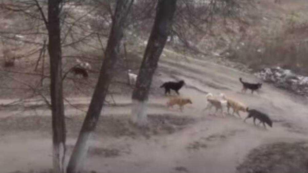 В Клинцах свора бродячих собак захватила территорию возле школы