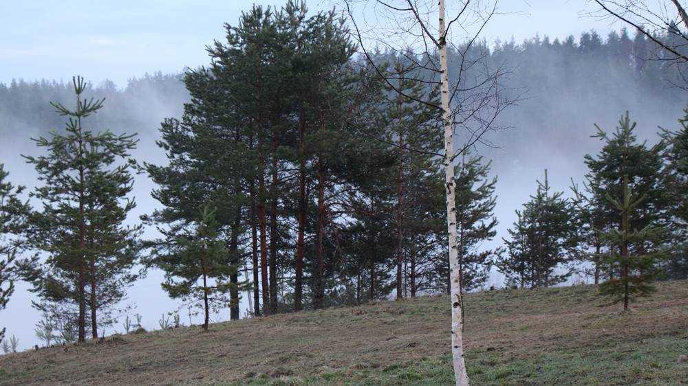 На Брянщине 26 марта 6-градусный мороз сменится 10-градусным теплом