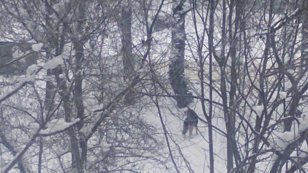 Брянцы рассказали о нападении собак на школьника в Путёвке