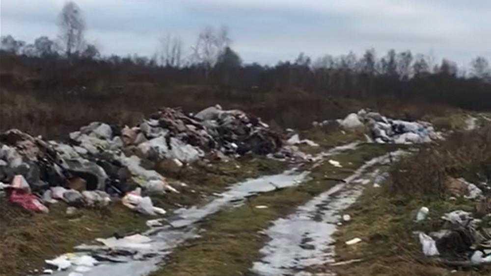 Брянскую колонию несправедливо обвинили в загрязнении леса мусором