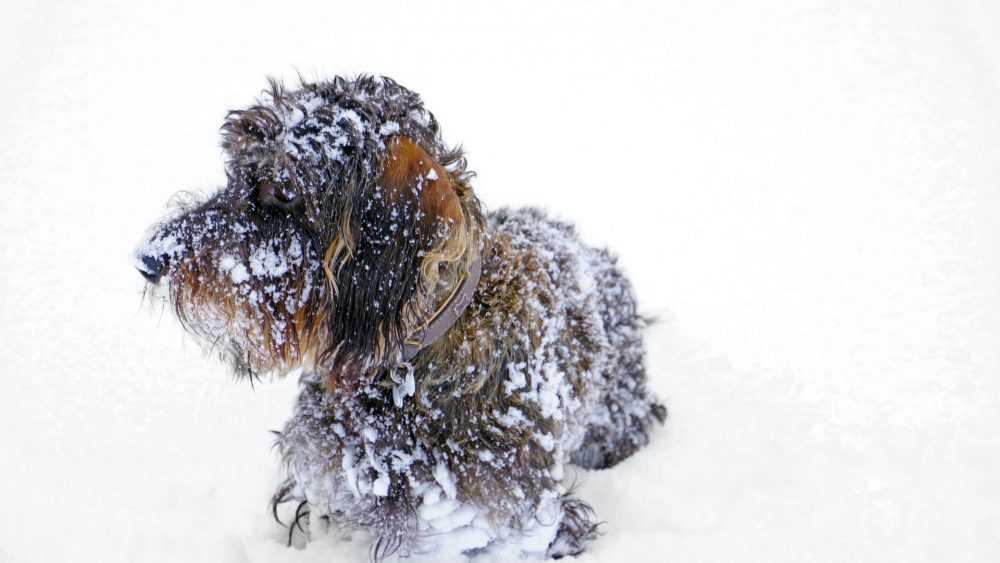 В Брянской области сильно похолодает