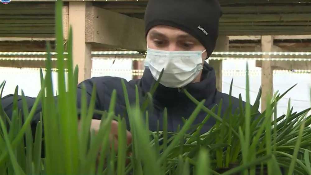 В Климовском районе фермер наловчился выращивать зимой зеленый лук