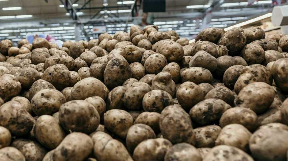 Украинские националисты подавились брянской картошкой