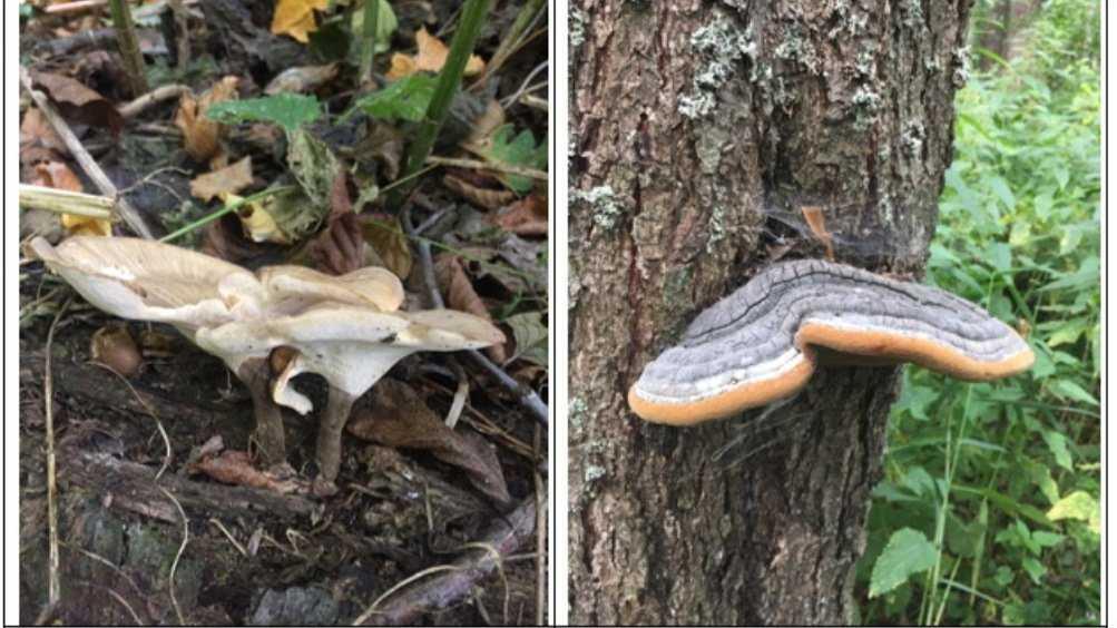 В заповеднике «Брянский лес» обнаружили 11 новых видов грибов