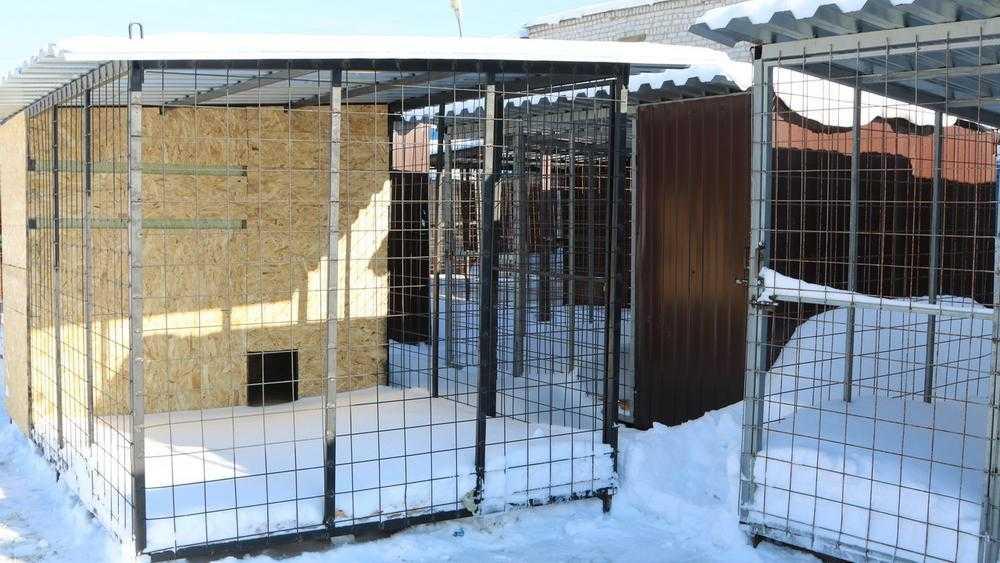 В Брянске на Почтовой откроют в марте приют для 200 бродячих собак