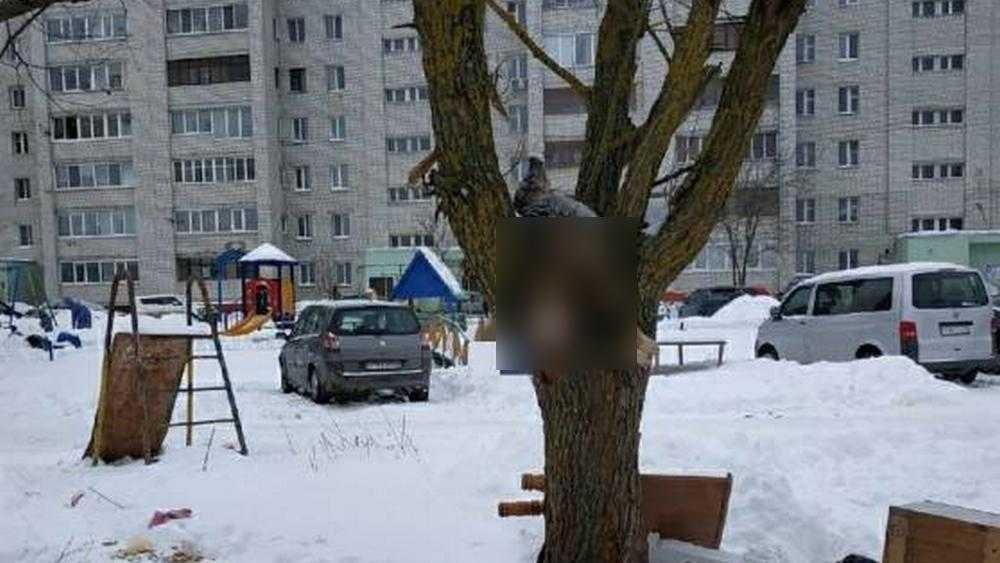 В Фокинском районе Брянска во дворе живодеры повесили на дереве собаку