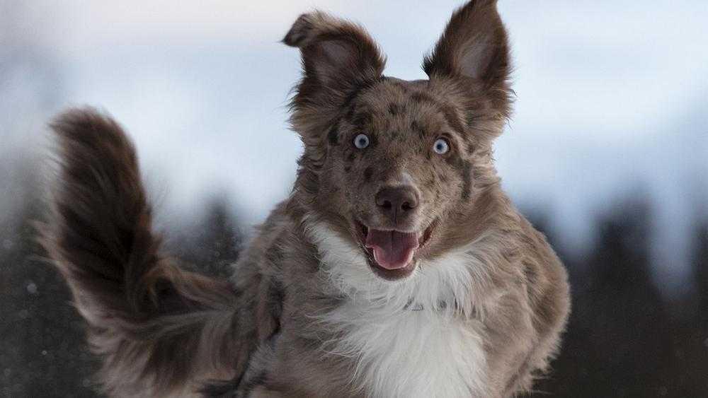 Дело о загрызенных собаками женщинах оставило вопросы у брянцев