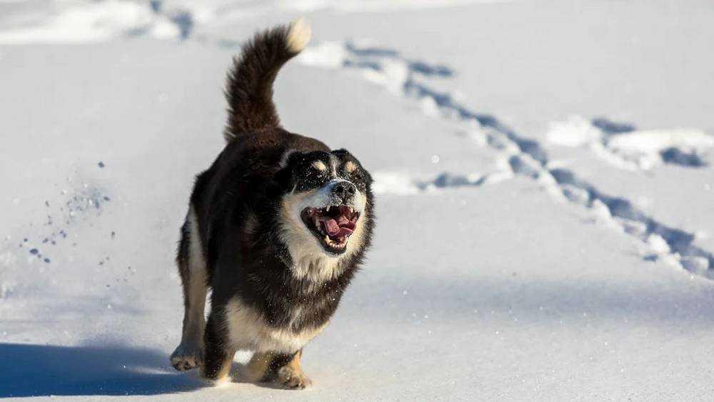 Губернатор устроил чиновникам Брянска разнос по поводу бродячих собак