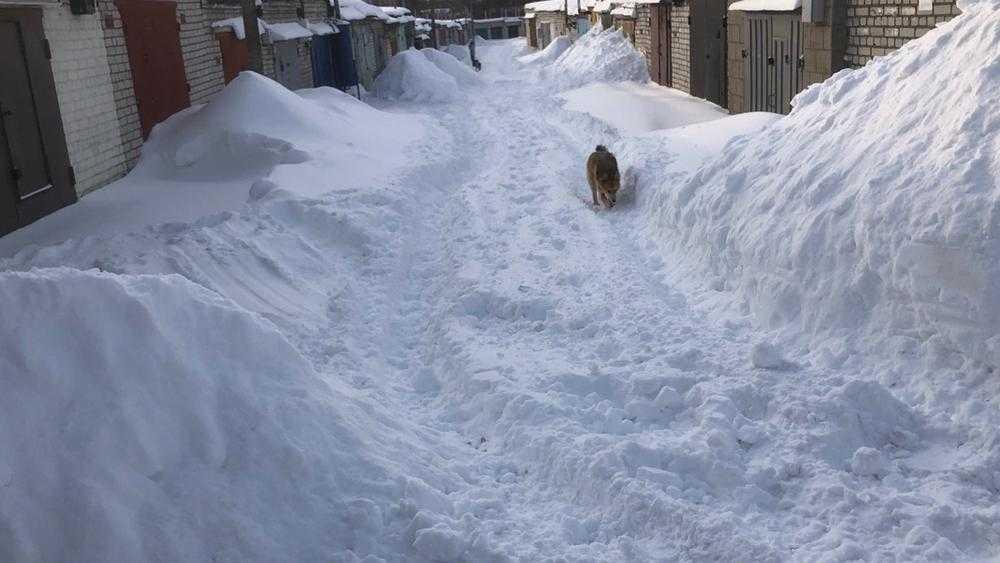 В Брянске некоторые дорожники превратили уборку снега в бизнес