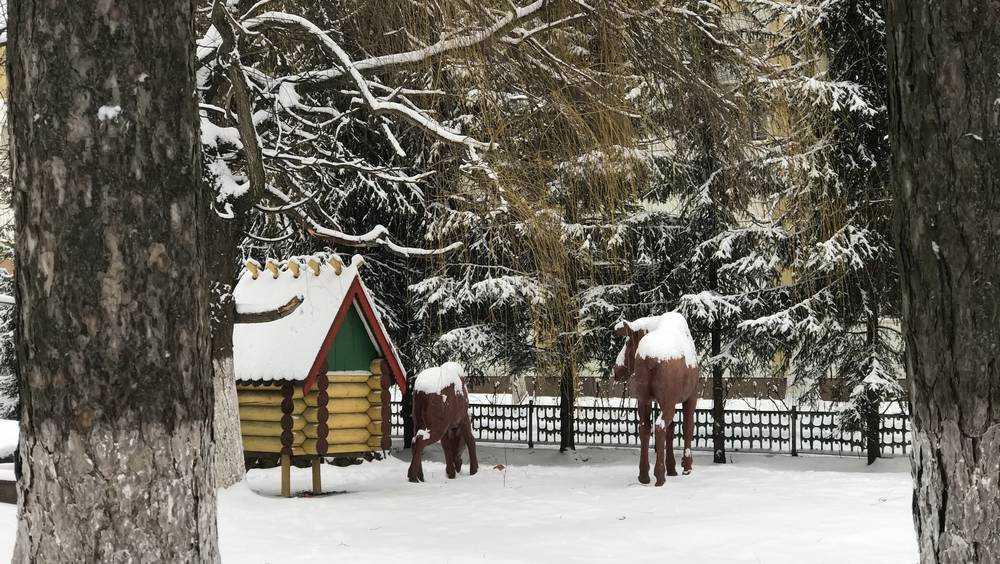 В Брянскую область ночью 20 февраля придёт 26-градусный мороз