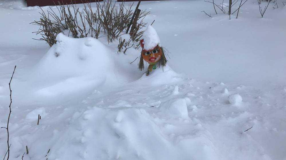 В Брянской области 16 февраля похолодает до 26 градусов мороза