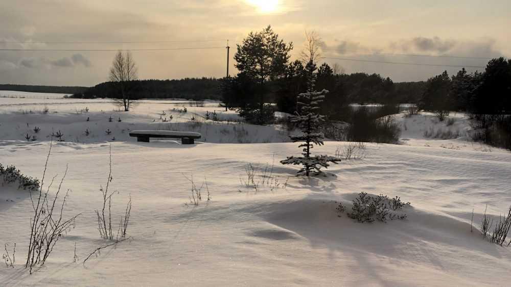 До 31 градуса мороза похолодает в Брянской области 19 февраля