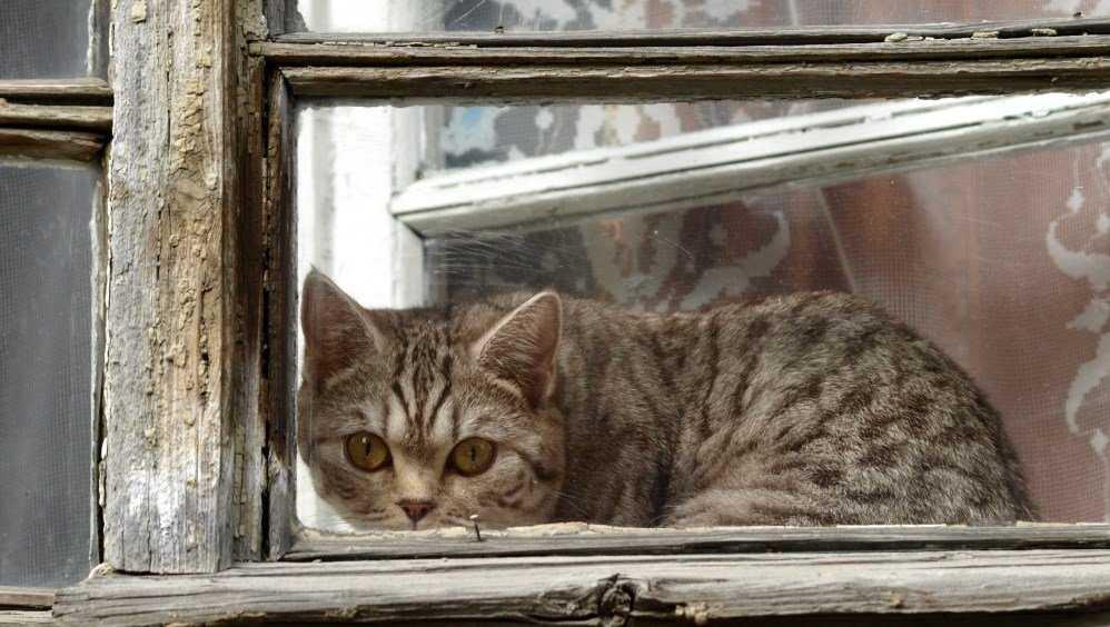 В Брянске живодёры выбросили кота из окна многоэтажки на Новостройке