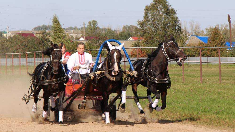 Наездника и лошадей Локотского конезавода признали лучшими в России