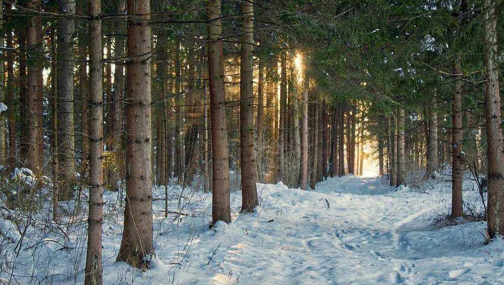 В Брянскую область придет 28-градусный мороз