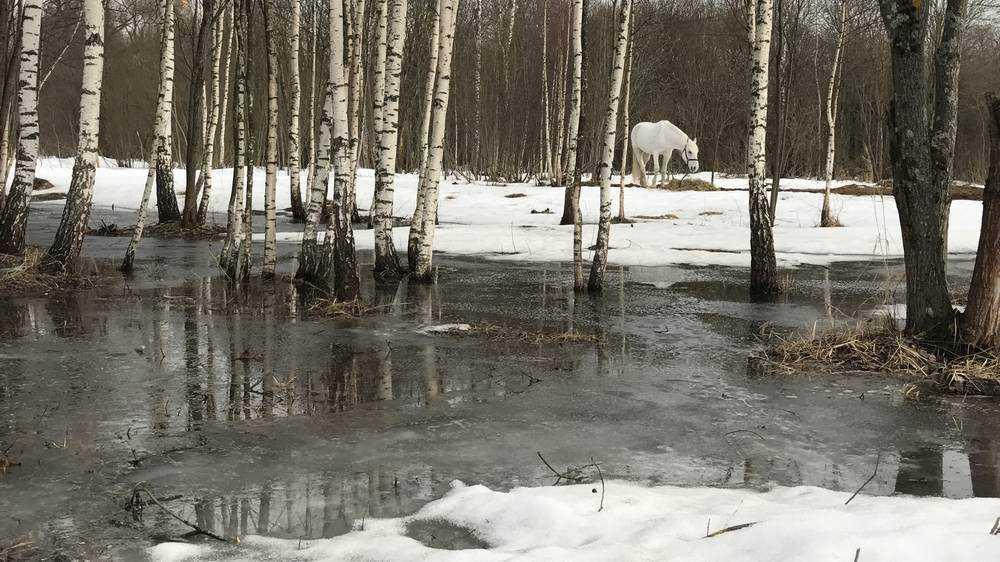 В Брянске с приходом 4-градусного тепла стали исчезать сугробы