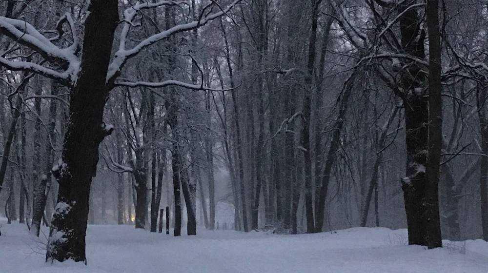 В Брянске МЧС объявило экстренное предупреждение из-за ухудшения погоды