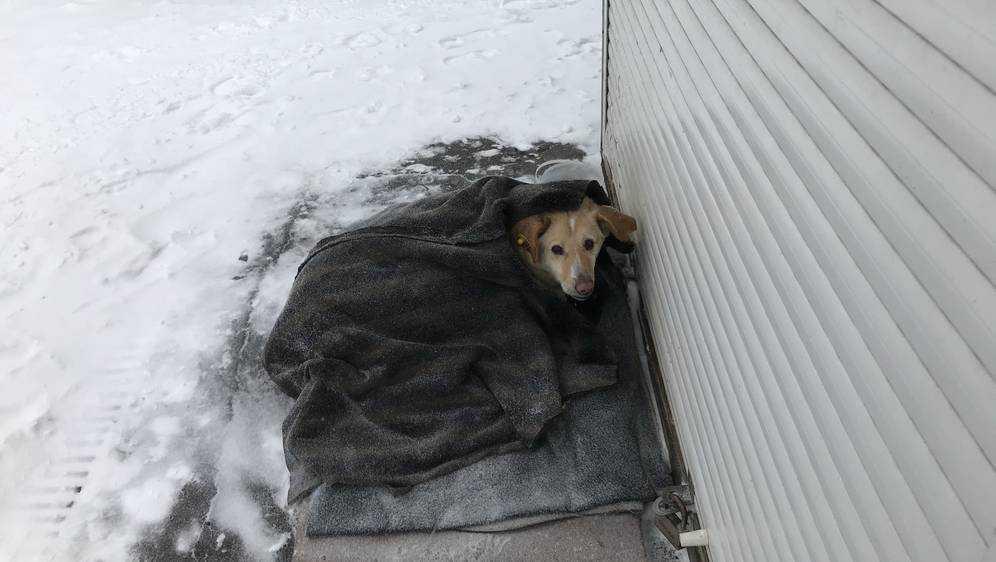 В Брянске вдвое увеличат временный приют для собак