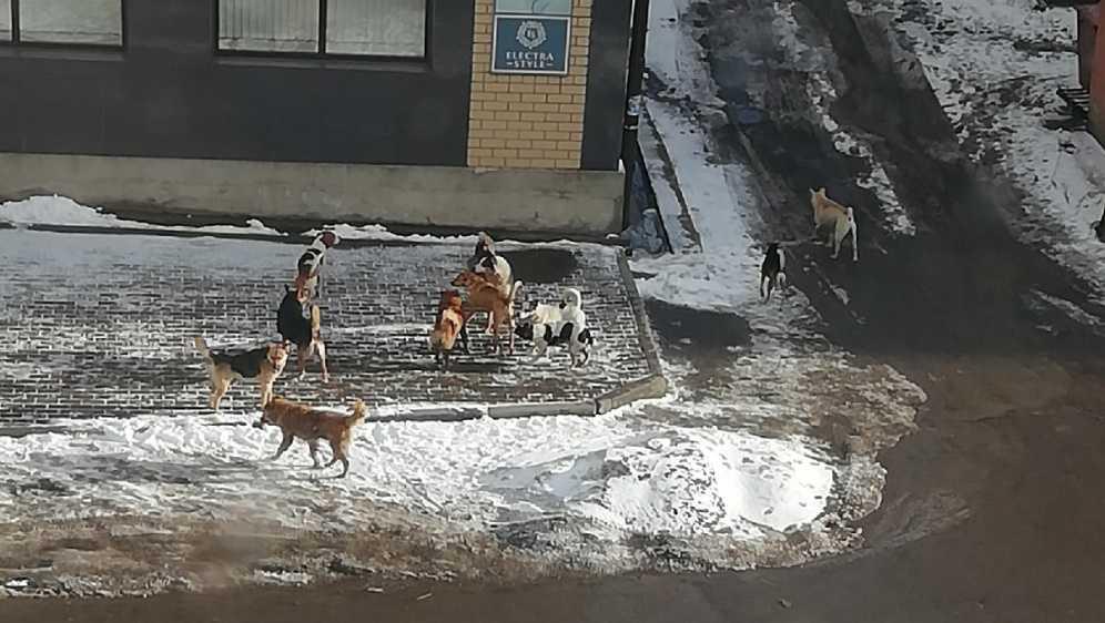В Клинцах Брянской области свора собак атаковала женщину с ребёнком