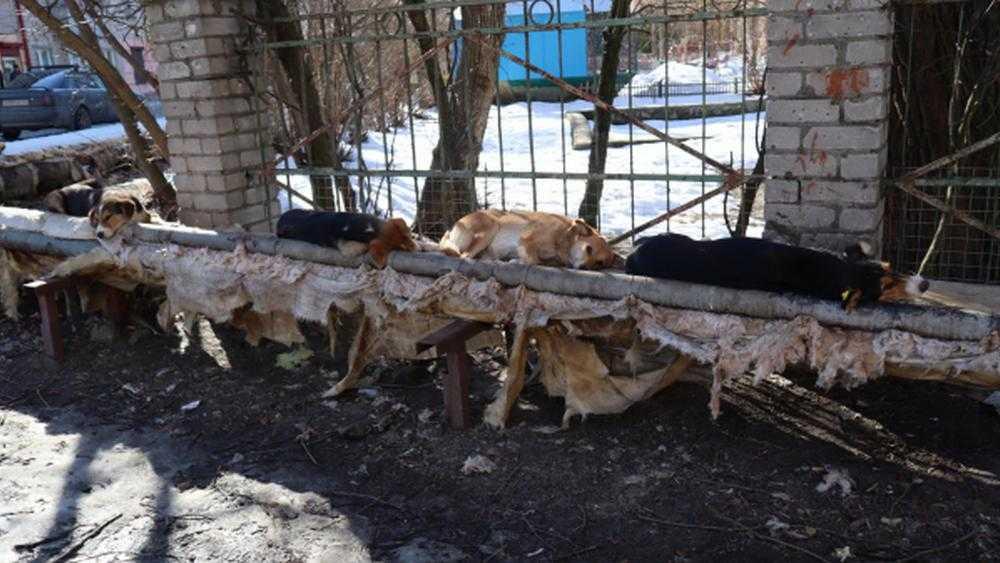 В Брянске стая собак превратила в лежбище теплотрассу возле детсада