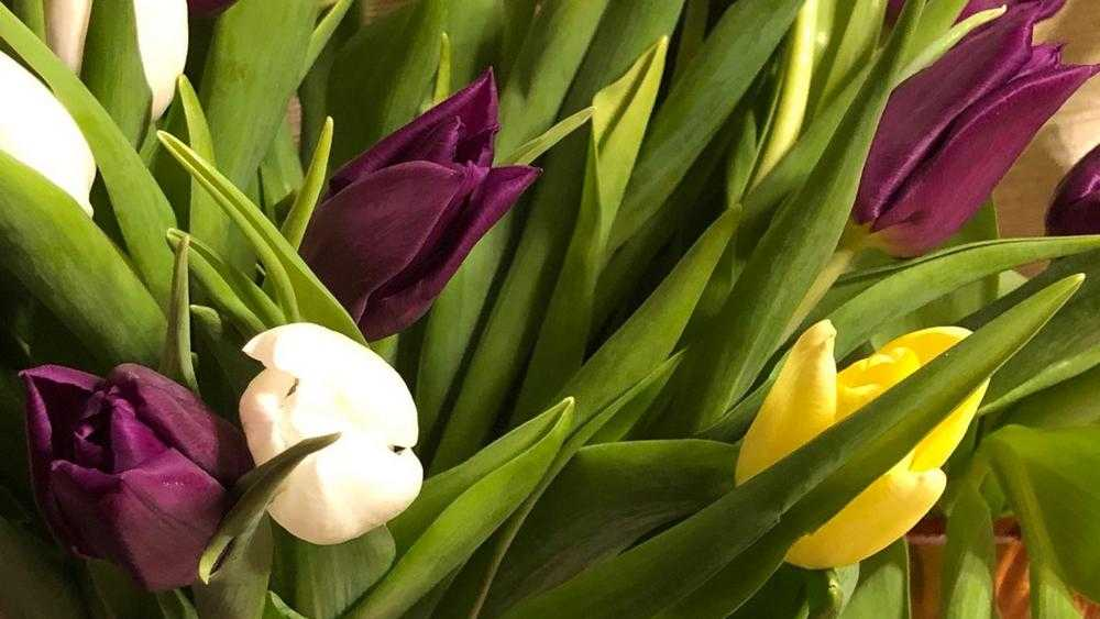 В Брянске вечером 8 марта тюльпаны распродали по цене сена