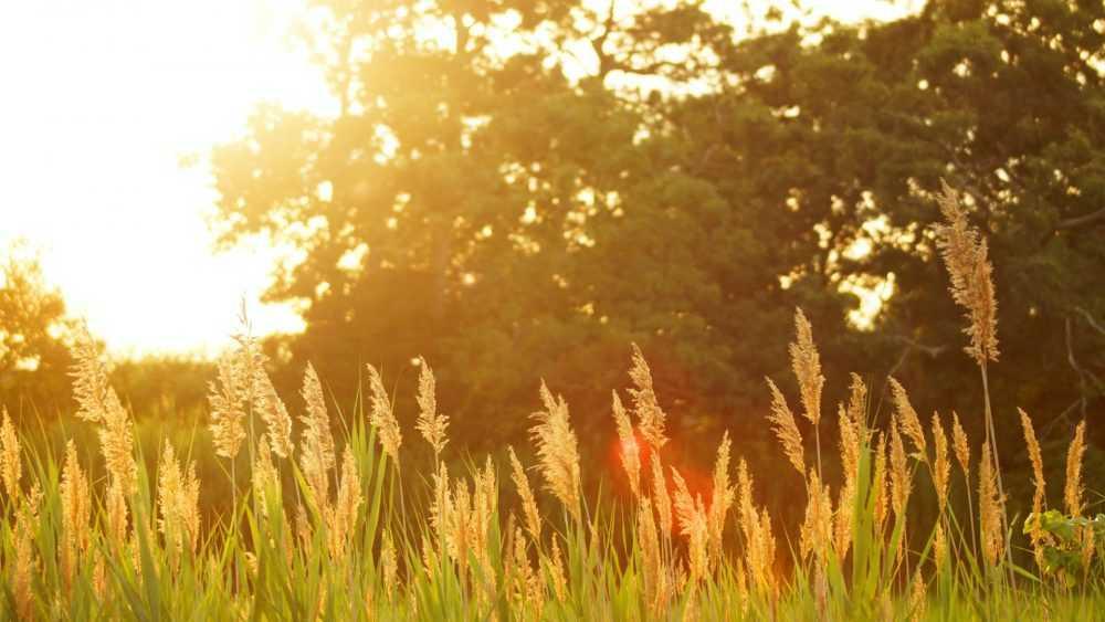 Жителей Брянской области ждет «персиковое» лето