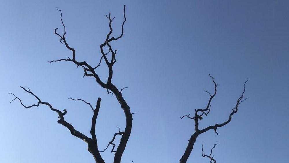Март изнурит жителей Брянской области мрачной погодой