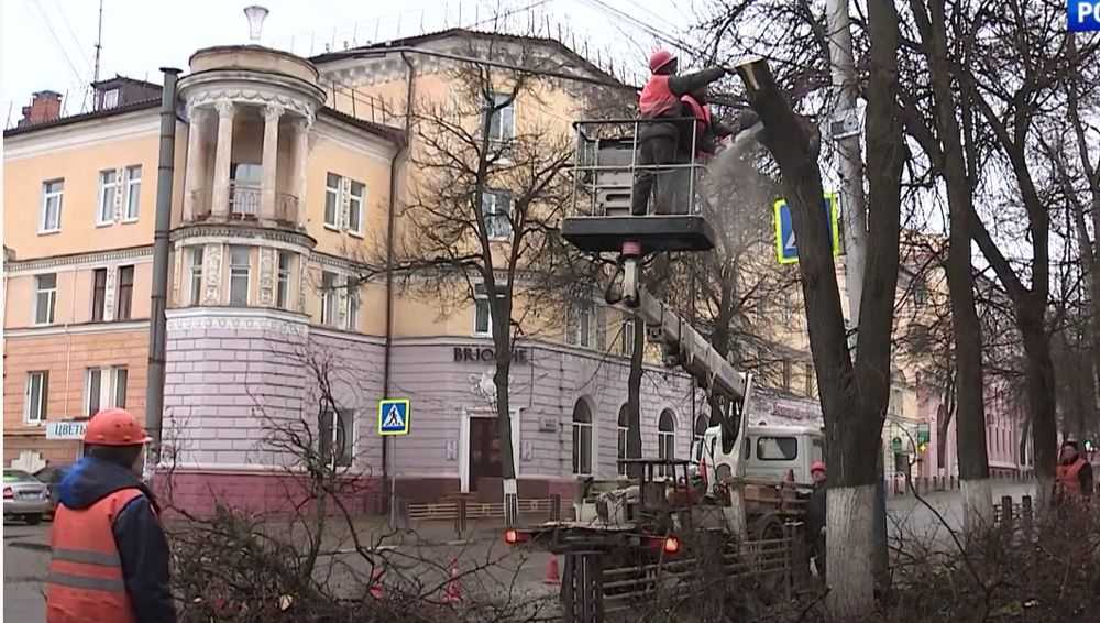 В Брянске в этом году кронируют более 1350 деревьев