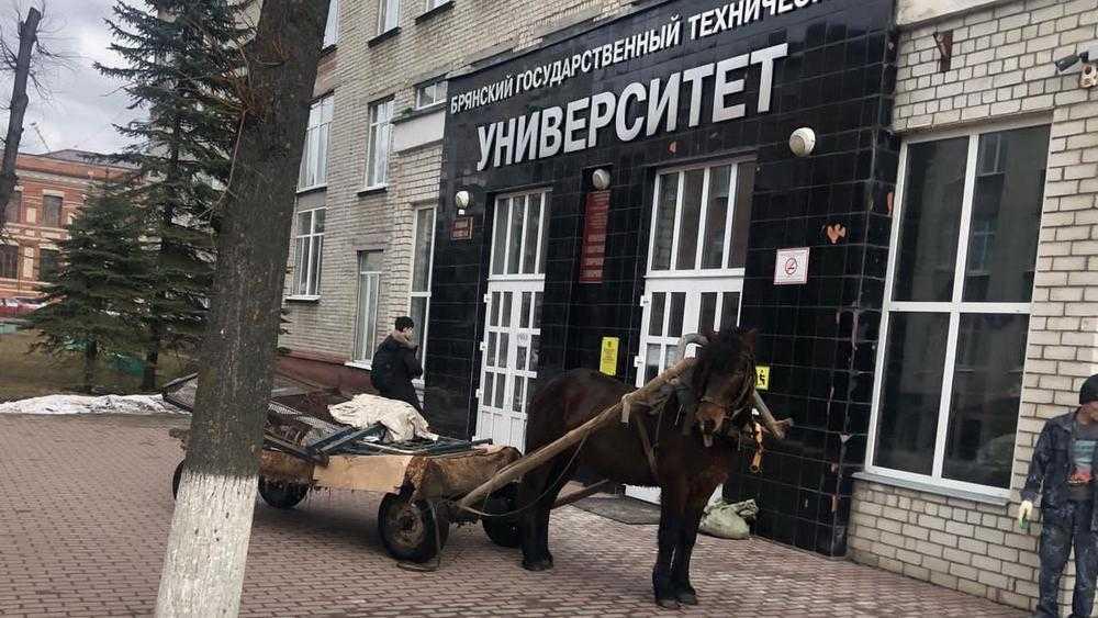 Жителей Брянска развеселила повозка с лошадью возле здания БГТУ