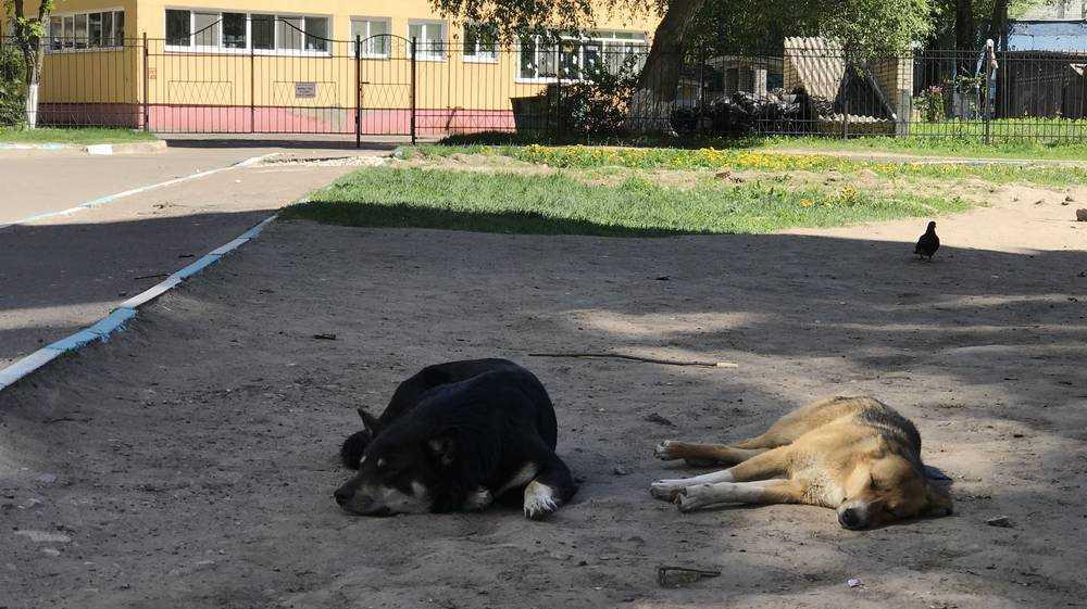 Открытие приюта для собак уже вызвало много вопросов у брянцев