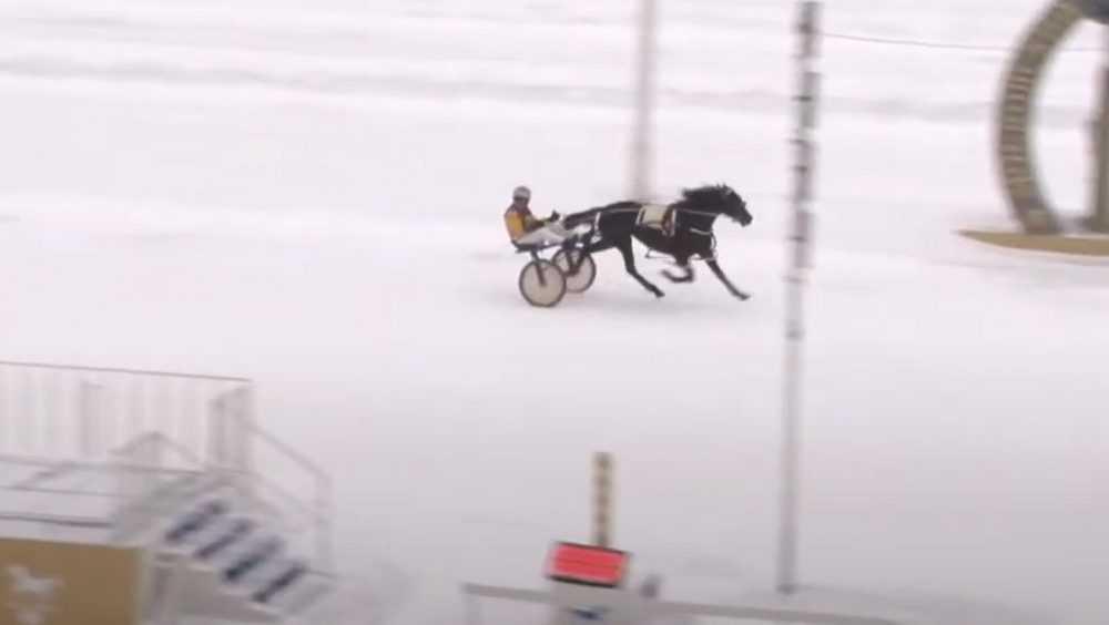 Локотская лошадь победила на Московском Центральном ипподроме