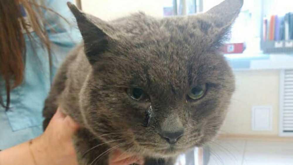 В брянском поселке Радица-Крыловка нашли избитого кота в мешке