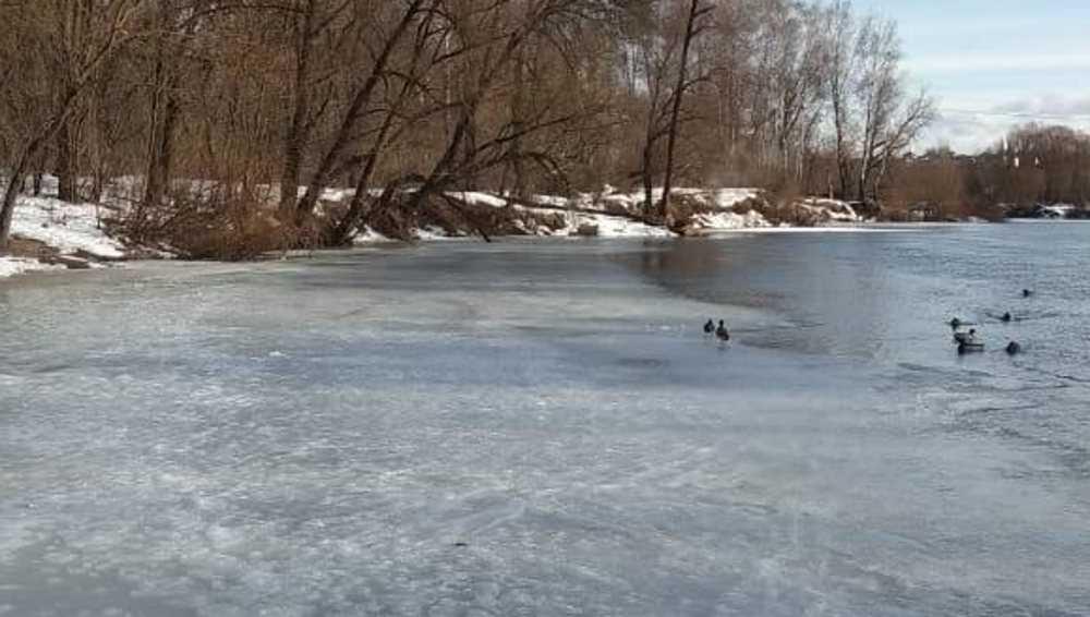 В Брянске спасли провалившегося под лед 11-летнего мальчика и девушку