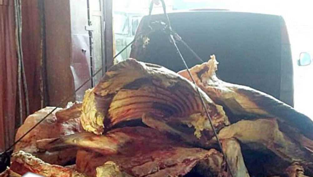 В Брянской области утилизировали груз подозрительной говядины