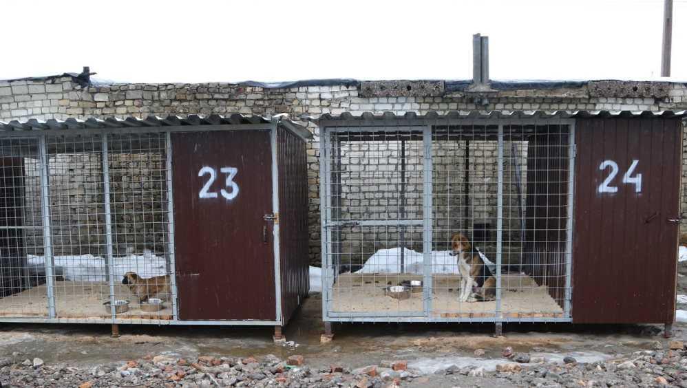 Мэр Брянска Макаров предложил расширить приют для бродячих собак на Почтовой