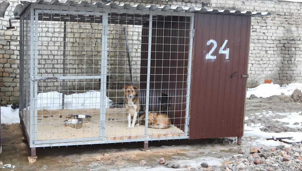 В Брянске на Почтовой улице приют для бездомных собак начал принимать животных