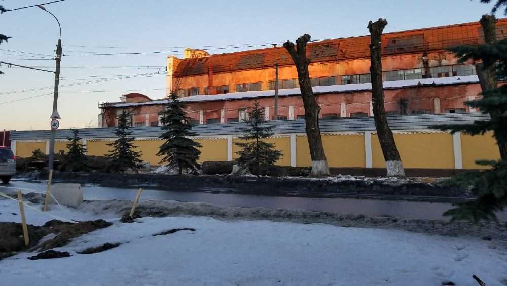 Брянцы поспорили о вырубке старых тополей на улице Ульянова