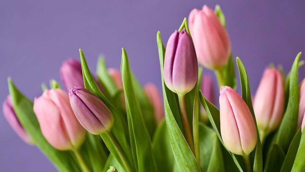 Накануне 8 Марта брянские продавцы установили огромные цены на цветы