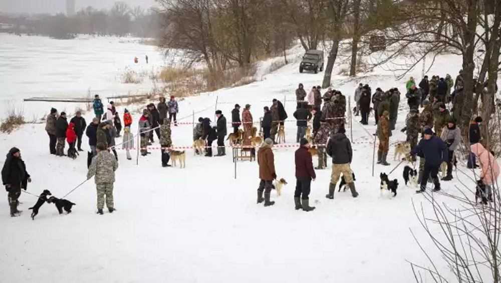 В Клинцах Брянской области прошла выставка охотничьих собак