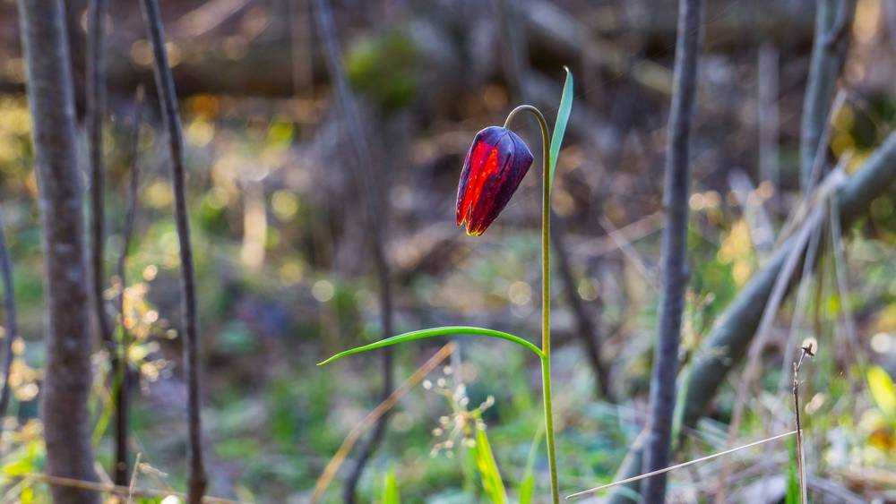 Брянец нашел в лесу сказочный аленький цветочек