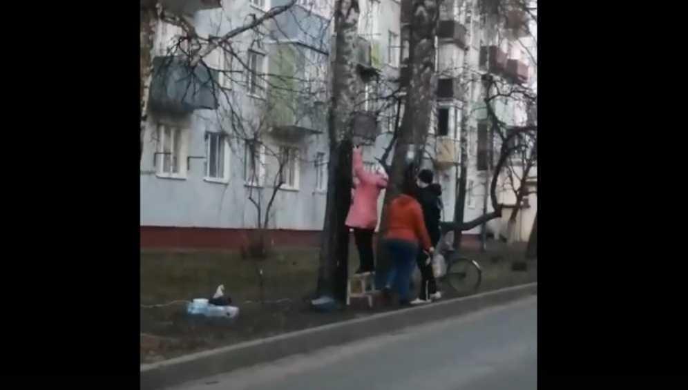 Жительница Клинцов назвала варварами добывавших берёзовый сок брянцев