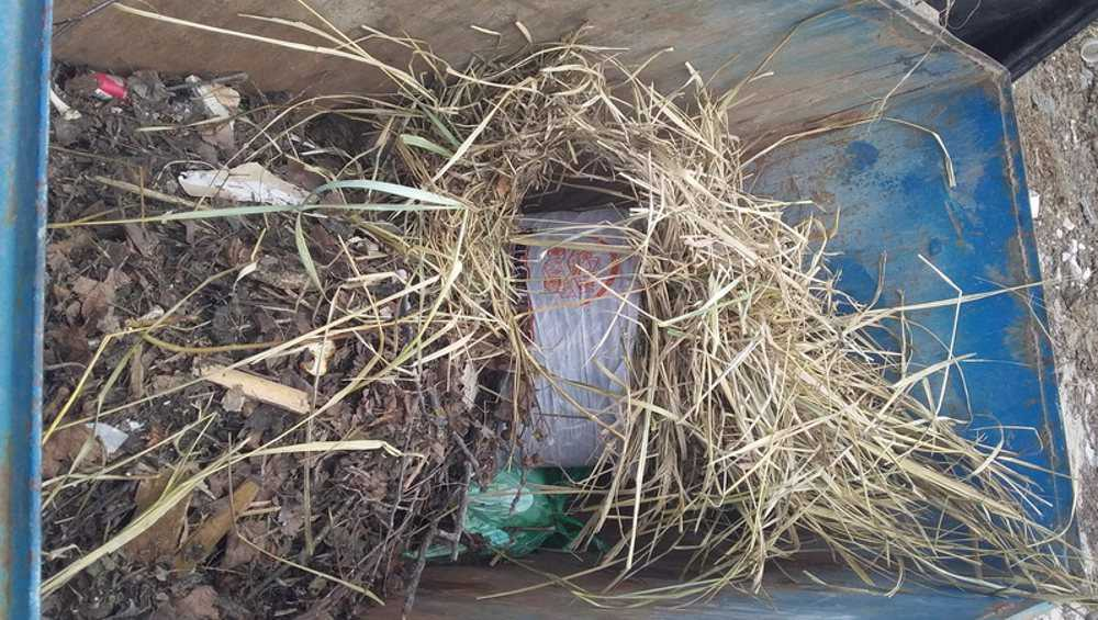 Дворники в Брянске начали забивать мусорные контейнеры растительными отходами