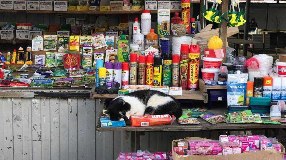 В Брянске на рынке появился продавец с хвостом