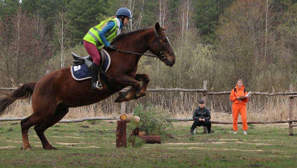 Под Брянском впервые прошли соревнования по конному туризму